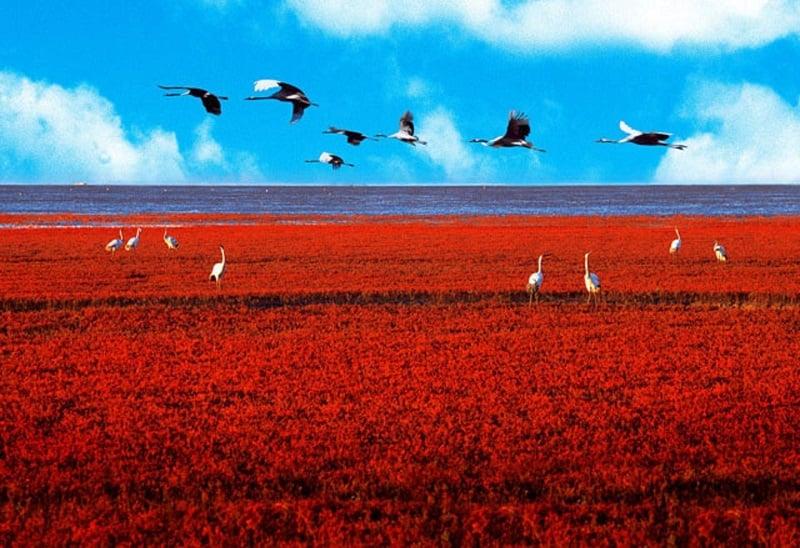 Красный китайский пляж