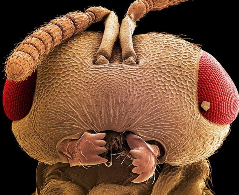 Head of an Ant Under Microscope