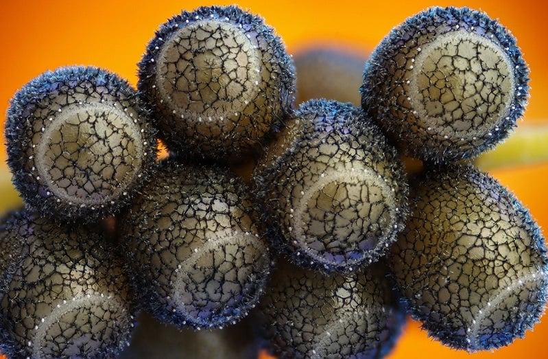Fish Eggs Under Microscope