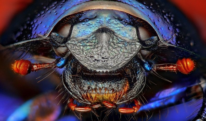 Fly Under Microscope