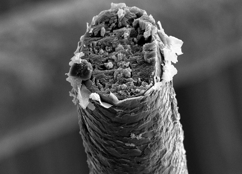Broken Strand of Hair Under A Microscope