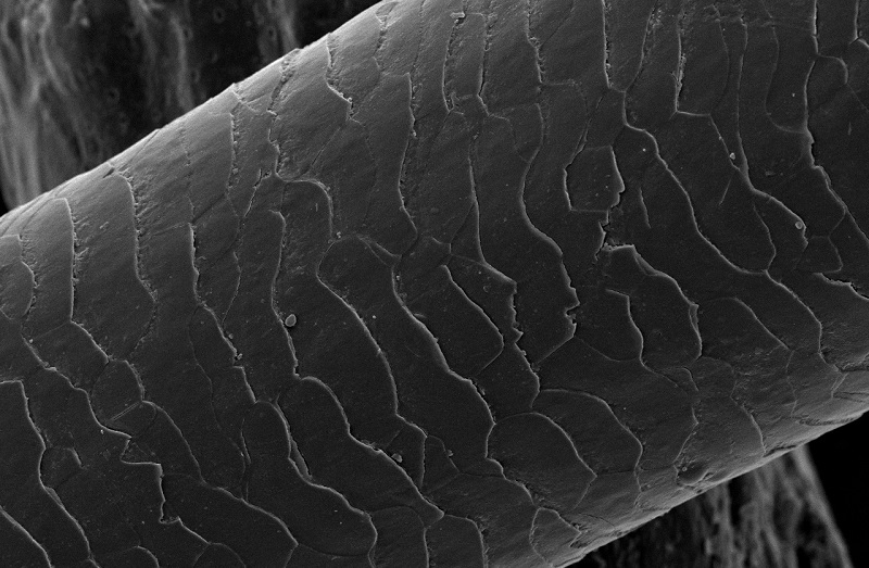 Strand of Hair Under Microscope