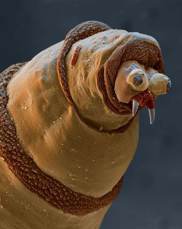 Microscopic Worm