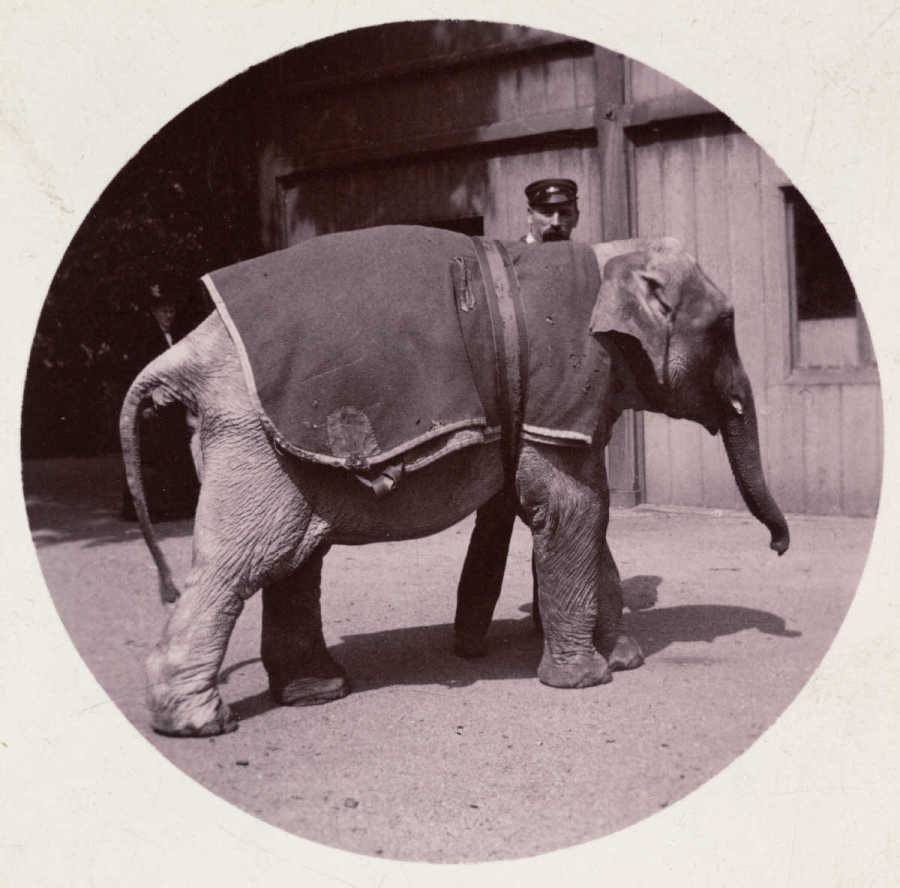 First Kodak Moments Elephant