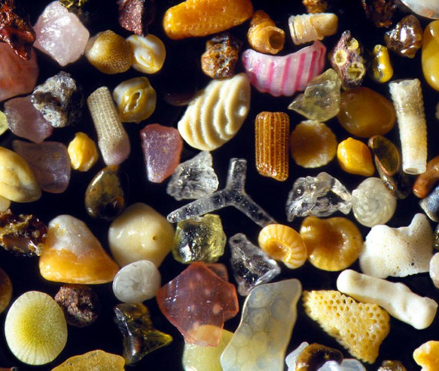 Magnified Sand Glass Shells
