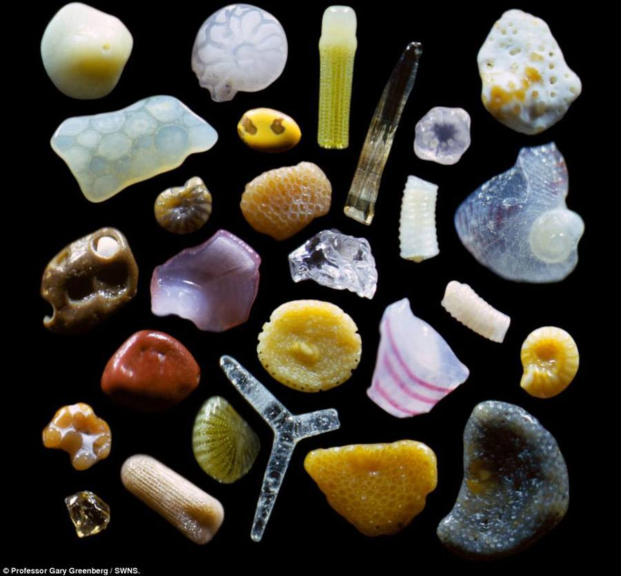 Magnified Sand Various Particles