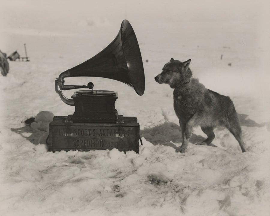 National Geographic Photos Gramophone Dog 1911