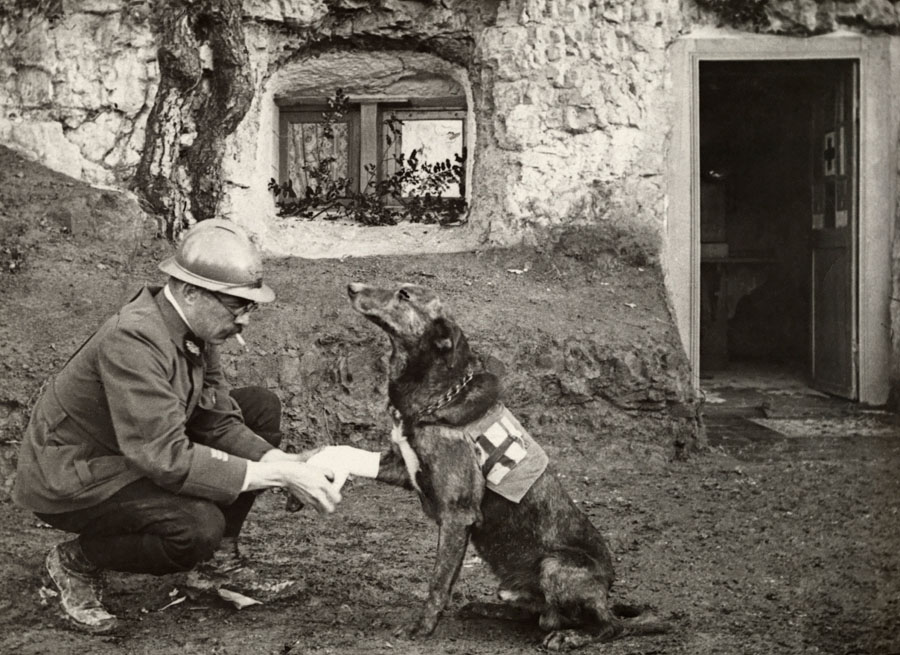 National Geographic Photos 1917 World War One Dog
