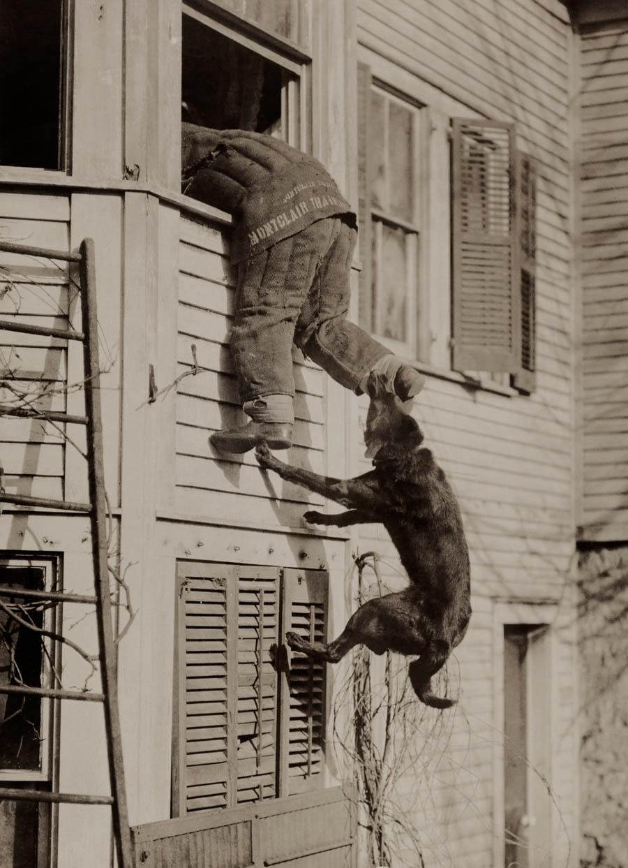 National Geographic Photos Police Dog Bites