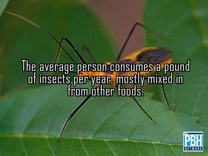 Average Human Consumes Insects