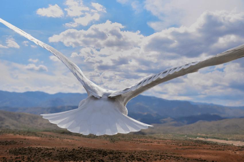 Birds Eye View Mountain Range