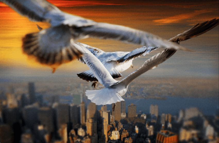 Birds Eye View New York