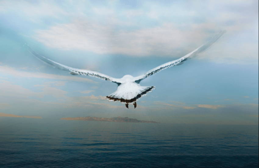 Birds Eye View Water