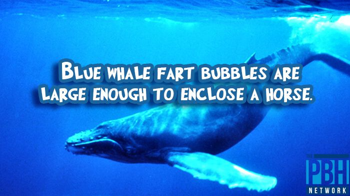Blue Whale Fart Bubbles