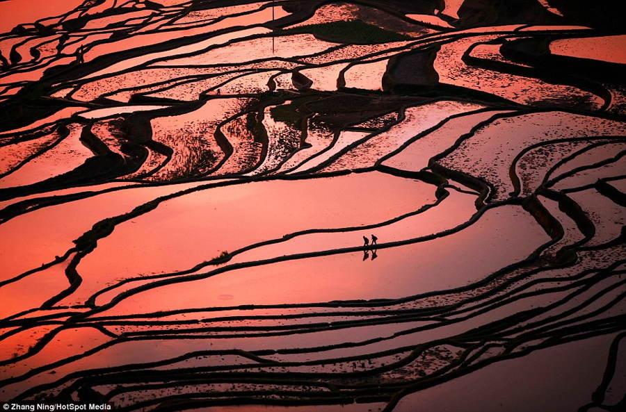 China Landscape Pink Lines