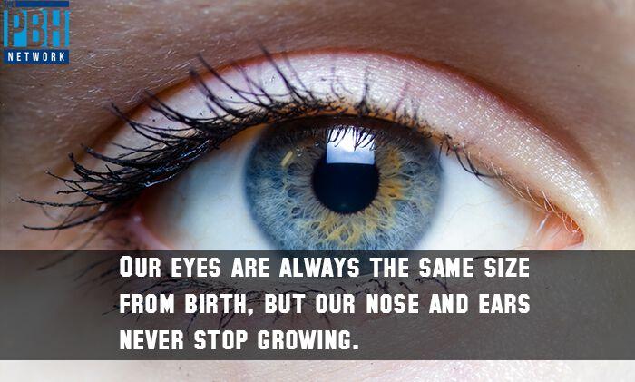 Eye Size