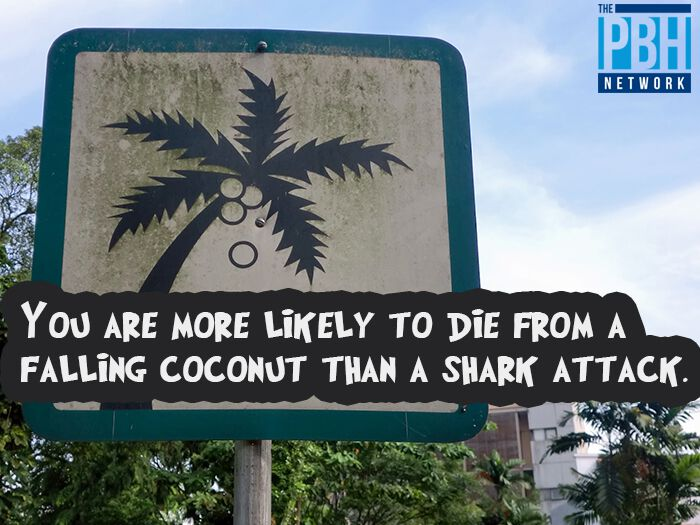 Falling Coconuts Versus Shark Attacks