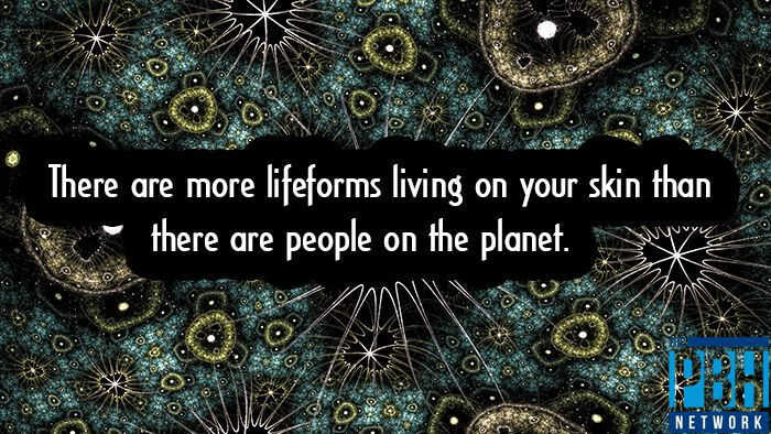 Lifeforms Living On Your Skin