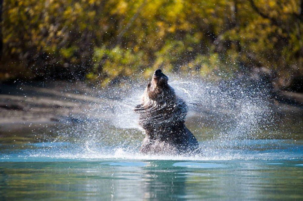 Nature Conservancy Contest Bear Water