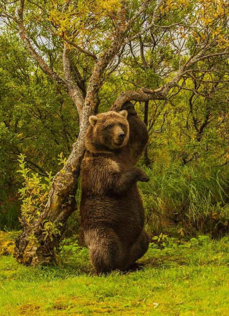 Nature Conservancy Contest Bear