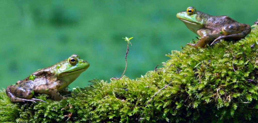 Nature Conservancy Contest Frogs