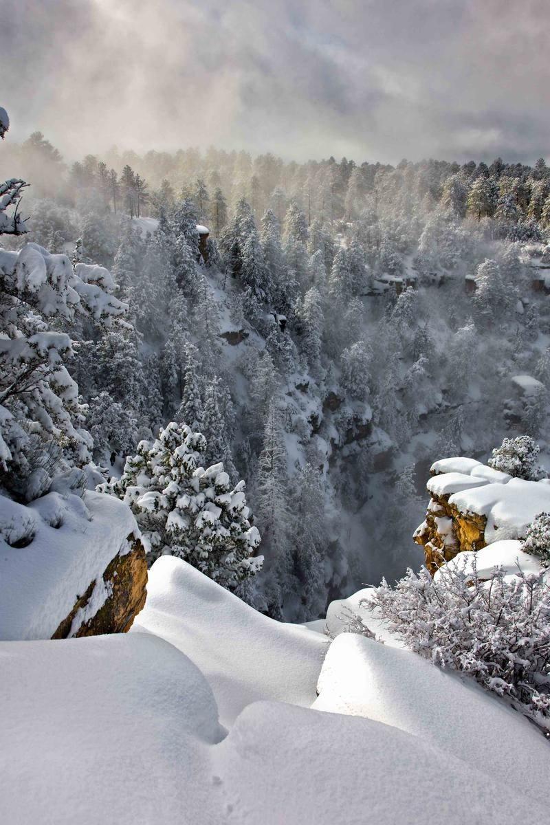 Nature Conservancy Contest Winter