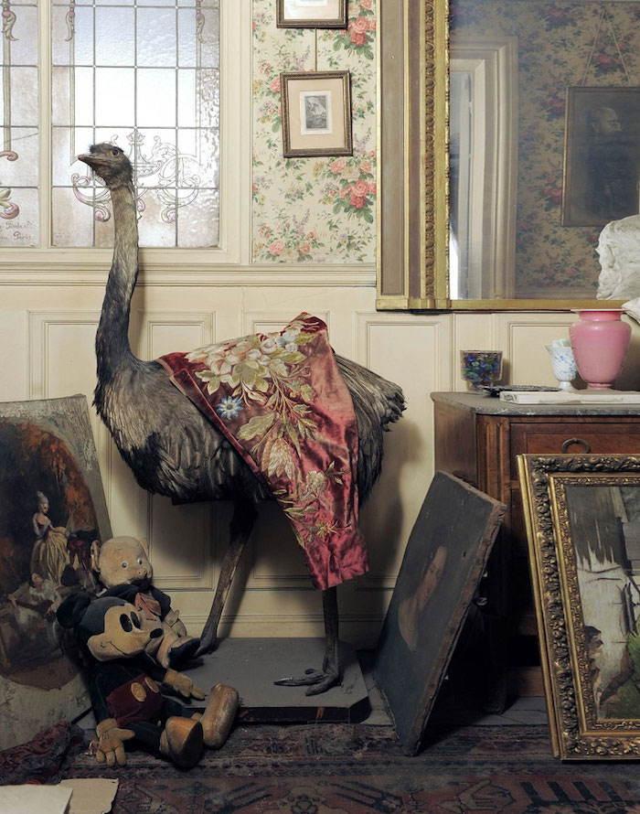 Time Capsule Ostrich