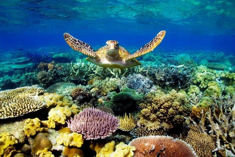 Underwater Art Gallery near Great Barrier Reef