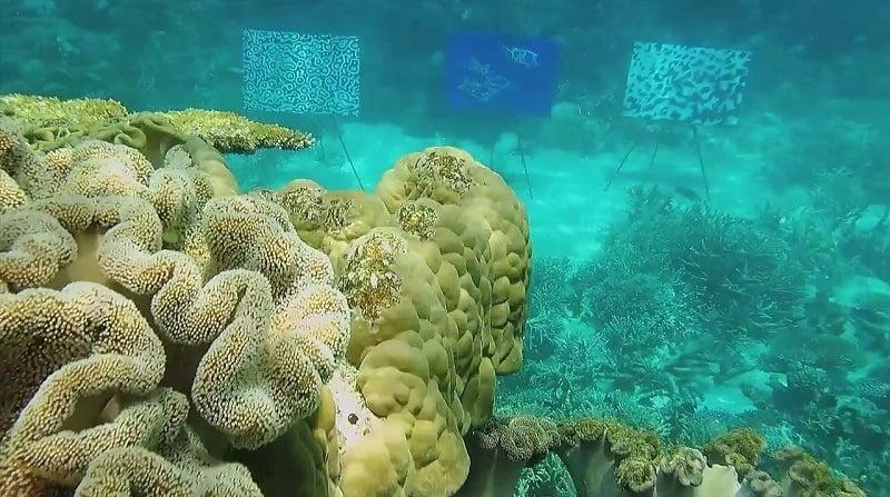Unfocused Underwater Art Gallery
