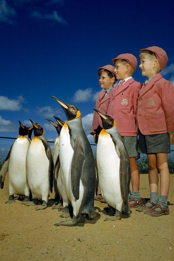 Boys Penguins