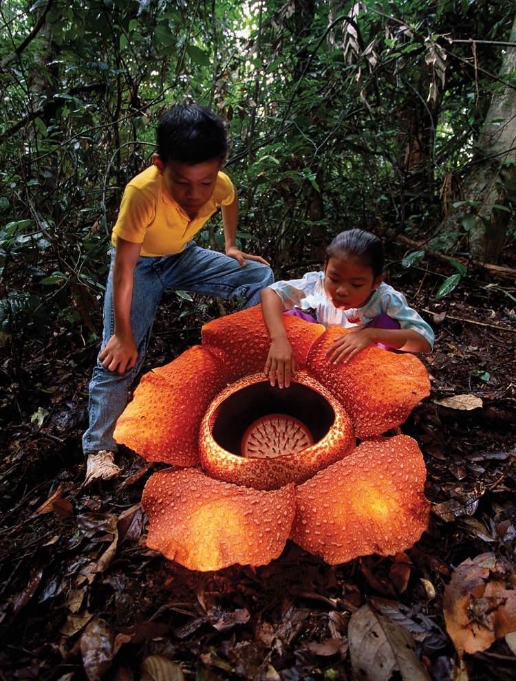 Interesting Plants Corpse Flower Kids