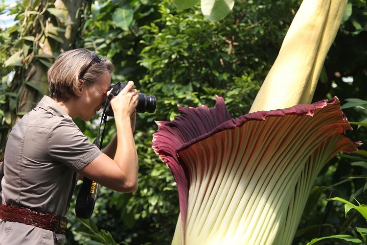 Fascinating Plants Titan Photographer