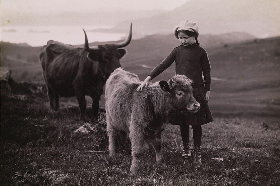 Girl Calf