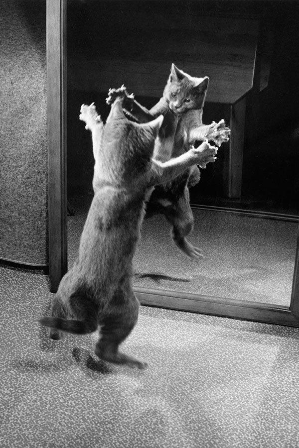 Kitten Attacks