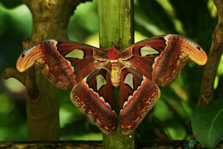 Beautiful Moth Species