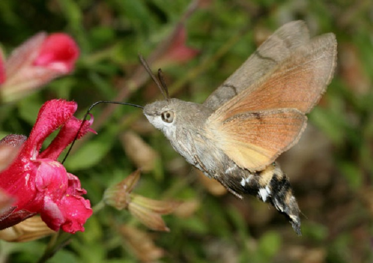 World's Most Beautiful Moth Species
