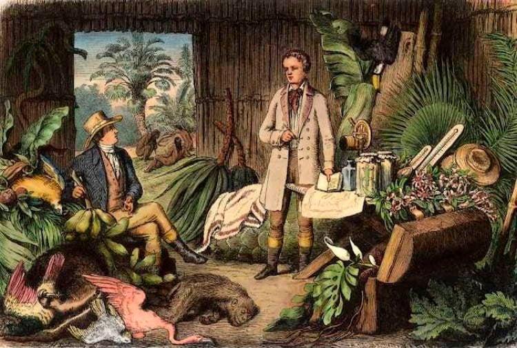 Scientific Heroes Humboldt In Jungle