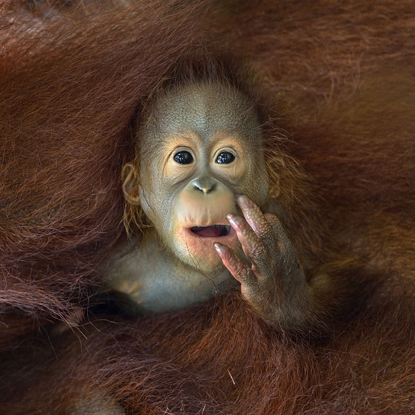 Image of Curious Monkey