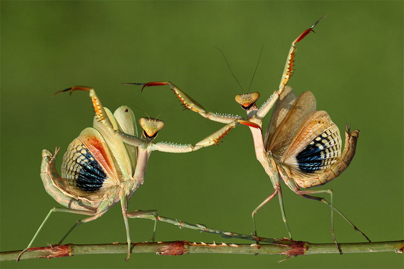 Insects in Sony World Photography Awards