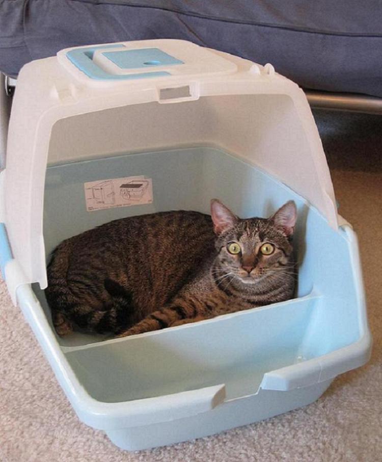 Weird Parasites Litter Box