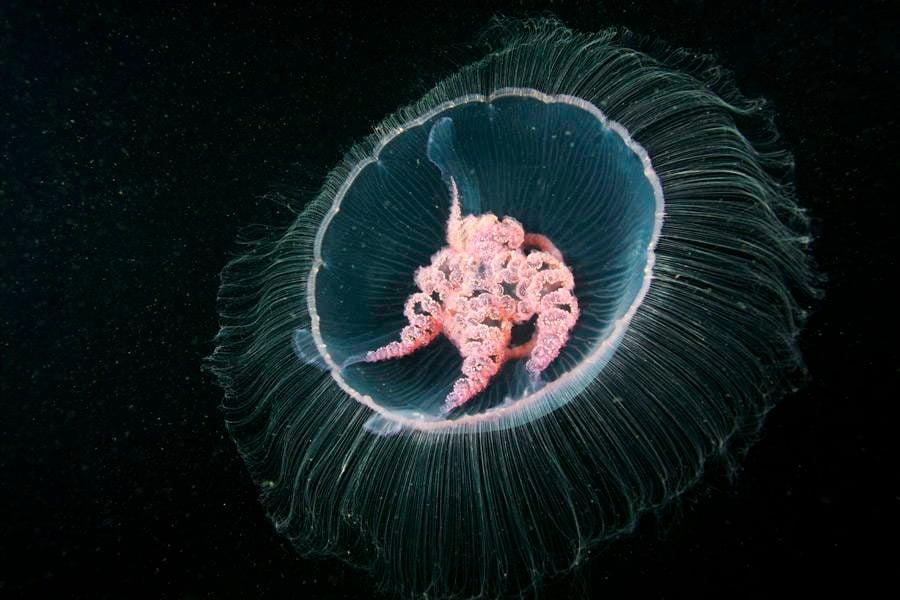 The Stunning Deep Sea Photography Of Alexander Semenov