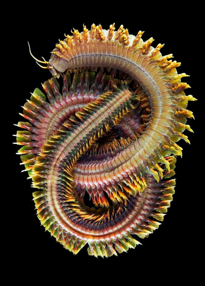 Deep Sea Photography Knotted Worm