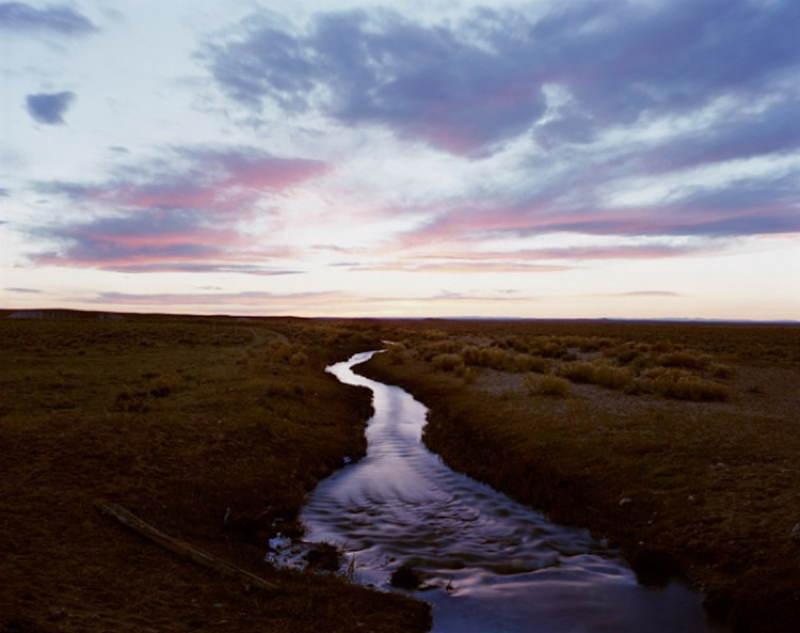 Lavender Stream