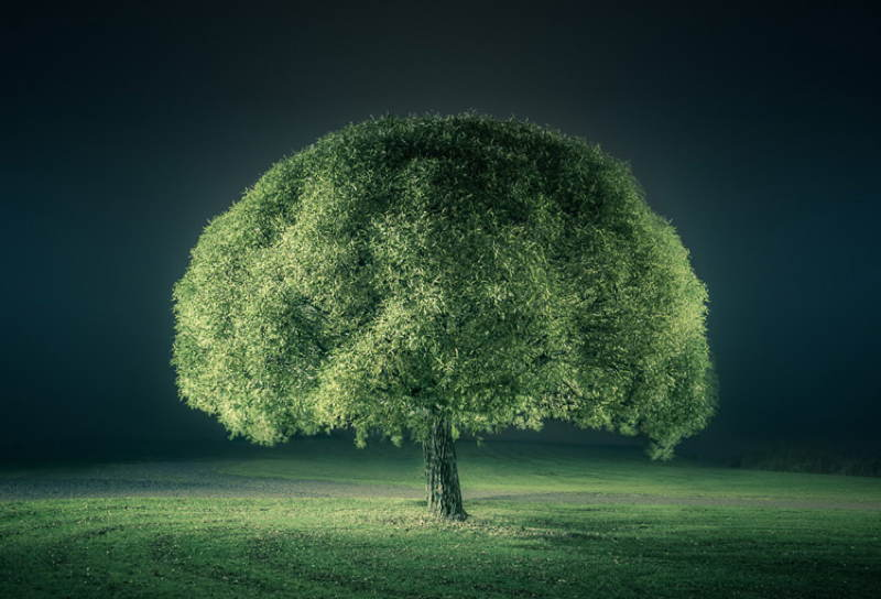Nature Photographers Green Tree