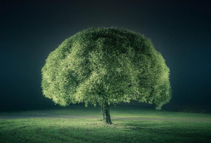 Nature Photographers Green Tree