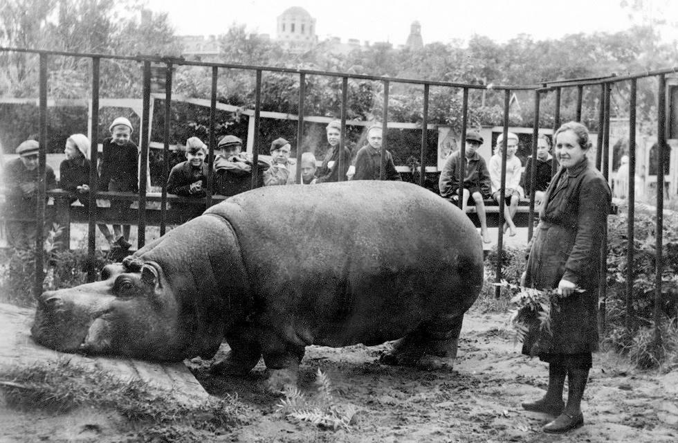 Belle The Hippo Leningrad