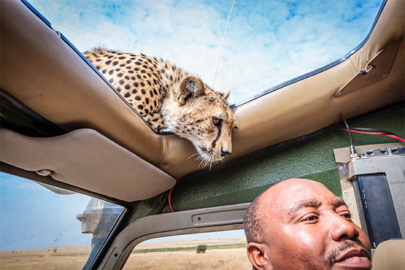 Cheetah Sunroof