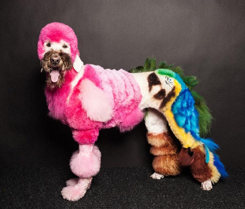Creative Dog Grooming Tropical Scene