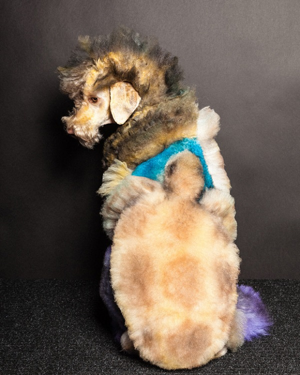 Paul Nathan's Creative Dog Grooming Photos