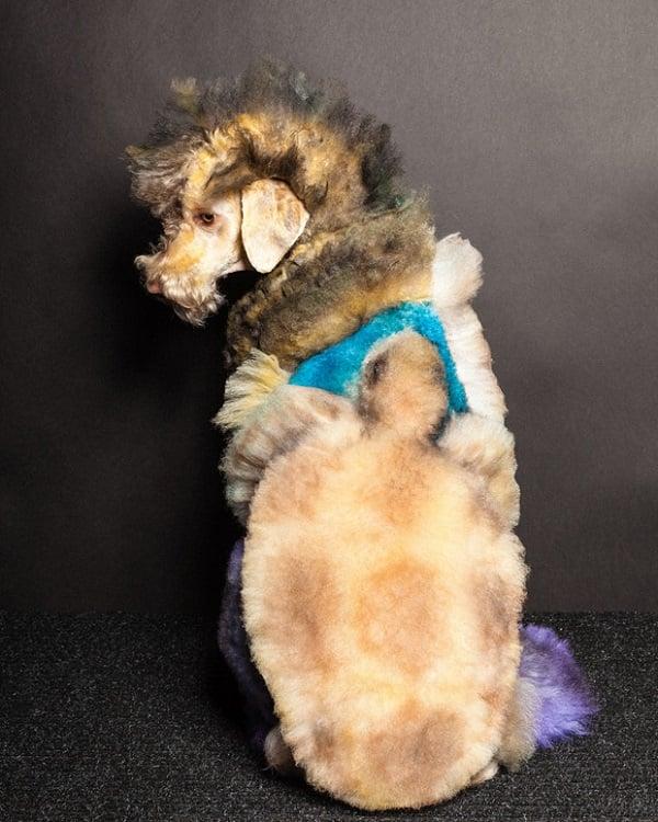Paul Nathan's Creative Dog Grooming Photos